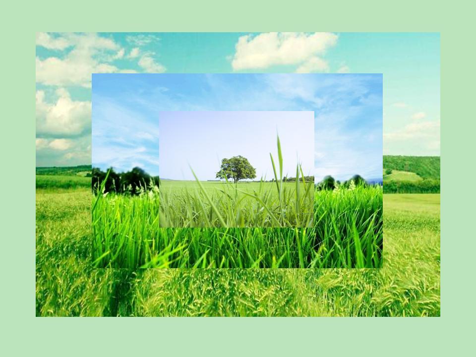 Медитация. Природа. Трава