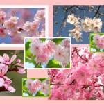 Момент цветения