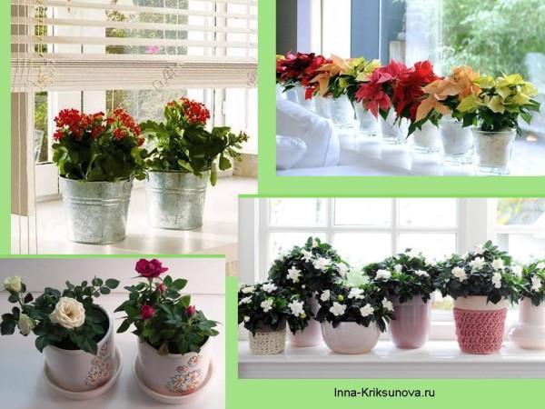 Цветы на подоконнике, одинаковые емкости