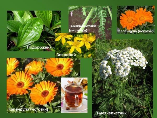 Лекарственные растения, помогающие от изжоги