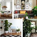 Большие комнатные растения в интерьере, у дивана