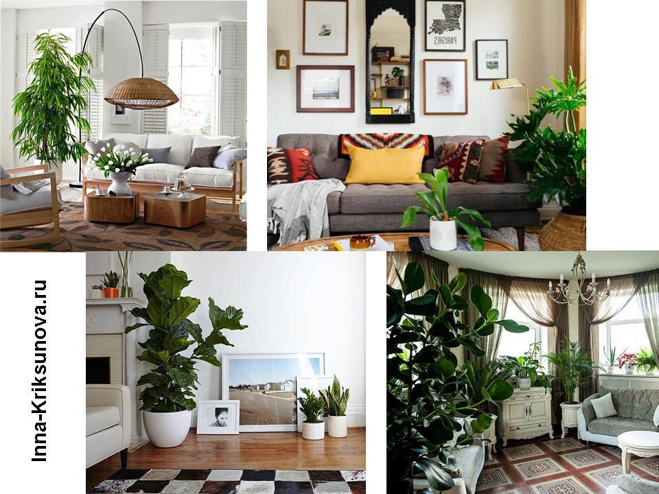 Большое комнатное растение в интерьере