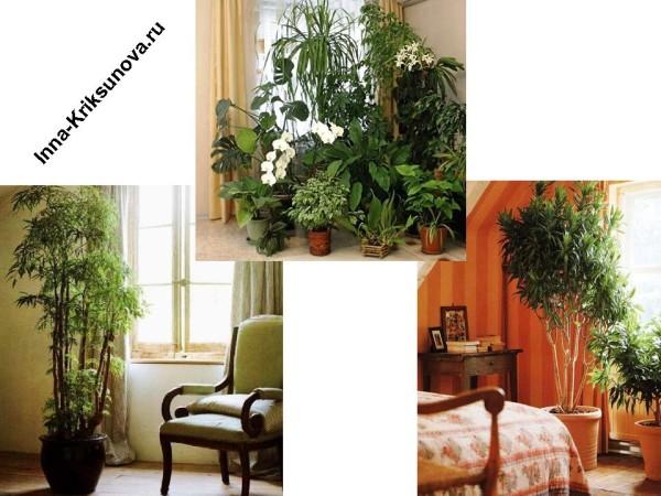 Большие комнатные растения в интерьере, у окна