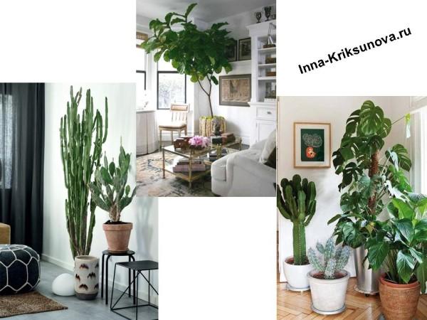 Большие комнатные растения в интерьере, около окна