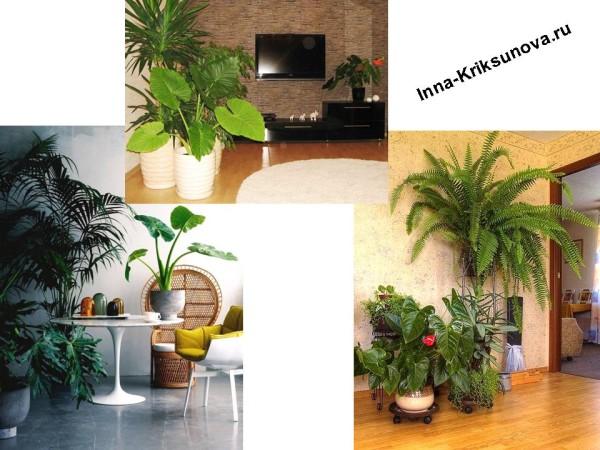 Большие комнатные растения в интерьере, у стены