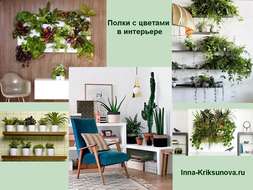 Комнатные цветы: как красиво расположить в интерьере
